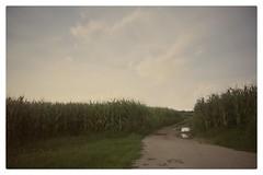 The field (Mi-Fo-to) Tags: campo grano field corn veneto italy night photography longexposure sky star stella cielo notturno pozza acqua riflessione water reflection campagna countryside magico