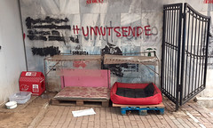 My city is Istanbul (Elif Ayiter/Alpha Auer/..../) Tags: istanbul beşiktaş city urban streets dog beds abbasağa
