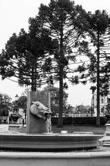 Curitiba-PR (Johnny Photofucker) Tags: curitiba paraná brasil brazil brasile pr fonte fontana fountain preto branco black white pb bw nero bianco noiretblanc monochrome araucária 24105mm lightroom largodaordem cavalobabão cavalo cavallo horse paisagem landscape arquitetura architecture architettura escultura sculpture