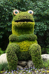 Zoo Frog (Bracus Triticum) Tags: zoo frog アルバータ州 alberta canada カナダ calgary カルガリー 7月 七月 文月 shichigatsu fumizuki bookmonth 2019 reiwa summer july