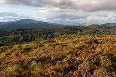 Evening Rush (http://www.richardfoxphotography.com) Tags: craigmore benledi sunset sunsetrainbow rainbow rainshower raincloud heather thetrossachs scottishhighlands scotland