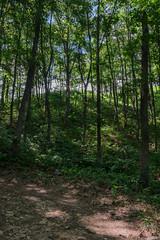 21090813XT3_6282 (Gansan00) Tags: fujifilm xt3 xf18135 fujifilmxseries japan hiroshima ブラリ旅 聖湖 深入山 snaps hijiriko landscape summer 8月 green akiota