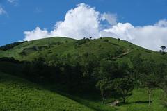 20190813XT3_6283 (Gansan00) Tags: fujifilm xt3 xf18135 fujifilmxseries japan hiroshima ブラリ旅 聖湖 深入山 snaps hijiriko landscape summer 8月 green akiota