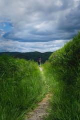 20190813XT3_6273 (Gansan00) Tags: fujifilm xt3 xf18135 fujifilmxseries japan hiroshima ブラリ旅 聖湖 深入山 snaps hijiriko landscape summer 8月 green akiota