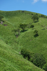 20190813XT3_6264 (Gansan00) Tags: fujifilm xt3 xf18135 fujifilmxseries japan hiroshima ブラリ旅 聖湖 深入山 snaps hijiriko landscape summer 8月 green akiota