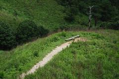 20190813XT3_6255 (Gansan00) Tags: fujifilm xt3 xf18135 fujifilmxseries japan hiroshima ブラリ旅 聖湖 深入山 snaps hijiriko landscape summer 8月 green akiota