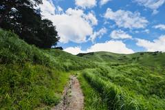 20190813XT3_6243 (Gansan00) Tags: fujifilm xt3 xf18135 fujifilmxseries japan hiroshima ブラリ旅 聖湖 深入山 snaps hijiriko landscape summer 8月 green akiota