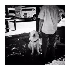 new york (s_inagaki) Tags: monochrome bnw street モノクロ 白黒 bw 散歩 blackandwhite スナップ snap スローフォト slowphoto 東京 tokyo
