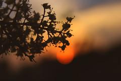 Sweet Evening...! (masuda moon) Tags: canon photography evening pov light sun sundown trees beautiful botanical colorful flickr 600d nature photograph google chrome 2019 moody beauty