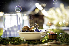 bath time (auntneecey) Tags: bathtime snail tabletop bubbles fun snailtales thesecretlifeofsnails 365the2019edition 3652019 day227365 15aug19