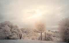 2019 08 15 Windeck IR - 77 (Mister-Mastro) Tags: wind bäume trees ir 720nm infrared