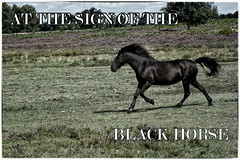 The Black Horse (Missy2004) Tags: nikkorafs18140mmf3556gedvr newforest pony 119picturesin2019 85119