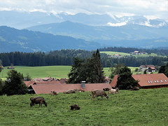 Bavarian landscape ... (N4135) (Le Photiste) Tags: clay bavarianlandscape mountains mountainlandscape mountainview cows nature naturesprime rainbowofnaturelevel1red planetearthnature planetearth ngc nikon nikoncoolpixs9900 mostrelevant mostinteresting perfectview beautiful afeastformyeyes aphotographersview autofocus artisticimpressions blinkagain beautifulcapture bestpeople'schoice creativeimpuls cazadoresdeimágenes digifotopro damncoolphotographers digitalcreations django'smaster friendsforever finegold fairplay greatphotographers groupecharlie peacetookovermyheart clapclap ineffable infinitexposure iqimagequality interesting inmyeyes livingwithmultiplesclerosisms lovelyflickr myfriendspictures mastersofcreativephotography momentsinyourlife niceasitgets photographers prophoto photographicworld photomix soe simplysuperb showcaseimages simplythebest simplybecause thebestshot thepitstopshop theredgroup thelooklevel1red vividstriking wow worldofdetails yourbestoftoday perfect awesomeview greatview bavariagermany cloudy bavarianlandscapenearriedgermany mountainvalley bavarianfarming farming