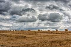 12082019-DSC_0043 (vidjanma) Tags: boulesdepaille nuages