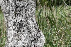 nikonD810-3693 (ulrich.gerndt) Tags: abstrakt birke nature