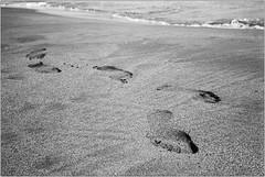 steps (Ulla M.) Tags: analogphotography analogue analog olympusmju schwarzweis sw bw bnw grain selfdeveloped selbstentwickelt beach strand spuren fusspuren dof agfaapx100 rodinal umphotoart filmphotography filmshooter film filmisnotdead kleinbild 35mm reflectaproscan10t