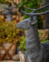 Deer! (Karol A Olson) Tags: columbiamall columbia maryland howardcounty deer 109ungulates 119picturesin2019