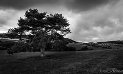 Old Tree (The_Achromat) Tags: bäume gewitter dramaticsky baum regen hessen himmel lichtundschatten berge dramatic bw wald wolken wetter