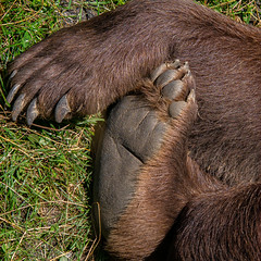 Der Wilde Berg, Mautern, Austria (Belle Aerials) Tags: brown bear foot