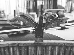BW | Kormoran im Hafen | 5. Juli 2019 | Fehmarn - Schleswig-Holstein - Deutschland (torstenbehrens) Tags: kormoran im hafen | 5 juli 2019 fehmarn schleswigholstein deutschland olympus ep5 ef18200mm f35