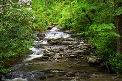 Smokey Mountain Stream (markburkhardt) Tags: