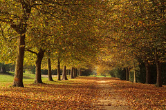 Photo of Golden Path 5784