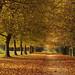 Golden Path 5784