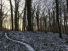 #winter #walk #☃️ #❤️ #🌅 #poland #poznań #sołacz #park #frozen #tree #sunset #skyporn #afternoon #sunday #weekend #path (pinus.acer) Tags: winter walk ☃️ ❤️ 🌅 poland poznań sołacz park frozen tree sunset skyporn afternoon sunday weekend path