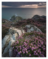 Anglesey Bloom (Ollie Pocock) Tags: canon coast angleseyheather rocks heatherandrocks heather sunset lighthouses seascapes seascape sea coastal lighthouse southstacklighthouse southstack angleseycoast anglesey northwales wales