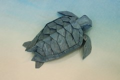 Origami Loggerhead Sea Turtle (Sasha CraftSpace) Tags: origami fold sashacraftspace sea turtle loggerhead blue korean