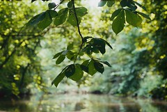 Testroll with Yashica Electro 35GX (idlike2sleep) Tags: nature yashica electro35gx 40mm fujifilm film analog c200 rangefinder leaf water leafs woods trees