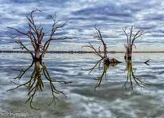 'Graceful retirement' (robby.macgillivray) Tags: river red gums lake bonney south australia murraylands reflections trees water nikon d810 24120 afternoon tranquil