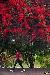 Afternoon in red (Otacílio Rodrigues) Tags: vermelho red flores flowers garota girl caminhando walking calçadão promenade árvores trees rio river urban streetphoto candid resende brasil oro natureza nature