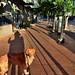 Shadows Cast on a Sidewalk