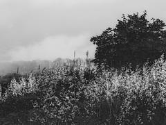 brouillard de vie (photosgabrielle) Tags: photosgabrielle people nuages cloud noiretblanc noirblanc bwphotography bw brouillard fog québec