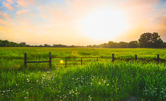 It'd be a lot cooler if you did. Circa 2015 (Sarah Rausch) Tags: fencefriday nikon kitlens 11 2015 fence queenanneslace susnset myplace rural country tennessee field pasture hff