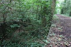 Jungle Platform