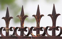 Détails de clôture (mrieffly) Tags: fencefriday fence clôture