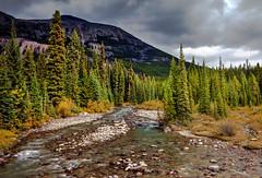 Poboxtan Creek, Jasper National Park, Alberta (klauslang99) Tags: klauslang poboxtan creek jasper national park canadian rockies alberta nature landscape water