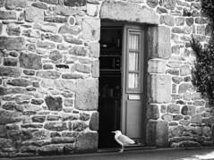 L'heure du petit déjeuner (Un instant.) Tags: birds door streetphoto bnw france bretagne noiretblanc goéland