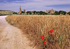 Trigo en Olite 🌾 (pascual 53) Tags: canon cereal iglesia cosecha castillo trigo olite navarra amapolas 1635mm 5ds