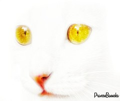 Cute or Evil , Comment what you feel! (Praveen Banneka) Tags: cat cute kitten evil yellow red white highkey exposure overexposed horror d5600 mobile edited edit snapseed pink nose eyes