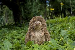 234 - Der ist mir neulich im Garten begegnet (heriholz) Tags: gras blumen bäume romantischeszenerie