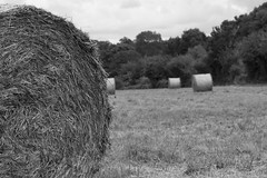 Hay Bails (microwyred) Tags: wheat autumn dry nonurbanscene landscape events hay nature crop meadow straw bale agriculture summer harvesting rolledup landscapes farm outdoors yellow ruralscene field