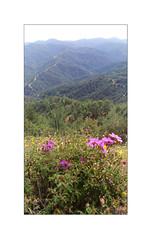 The View (Sam H. Maas) Tags: landschaft landscape nature natur berge mountain himmel sky blumen flower hügel hill outdoor ausenaufnahme bäume tree wald forest weg path tal valley
