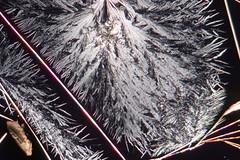 Néo-mercazole saison 5 (b.dussard25) Tags: microphotographie abstract abstrait macrophotography canon pharmacy microphotography macrophotographie visualart