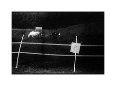 Electric horses (Grax!) Tags: leicaiiia summar5cm trix pyrocathd expired filrm grax summer 2019