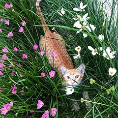 I envy my cat the most! No one knows how to make life a bed of flowers better... ? ? ? ? ? #catsofinstagram #cats #catstagram #instacat #kitty #kitten #catlover #猫 #meow #catoftheday #ねこ #neko #gato #??? #ilovemycat #catsagram #catlovers #kittens #bestmeo