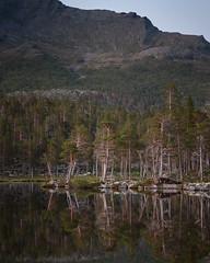 Stora Sjöfallet Nationalpark III (Gustaf_E) Tags: forest kväll lake landscape landskap laponia lappland nationalpark norrland pine sjö skog sommar storasjöfallet storasjöfalletnationalpark sverige sweden tall urskog woods