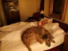 More 'Team Dreaming' Than 'Dream Team' (andywalker1) Tags: andrewwalker karhu wolfhound irishwolfhound dalmunziecastle